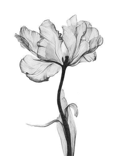 Artwork_Bloom_Hayley-McMurray-canvas-print