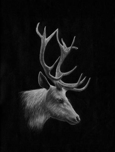 Artwork_Elk_Hayley-McMurray