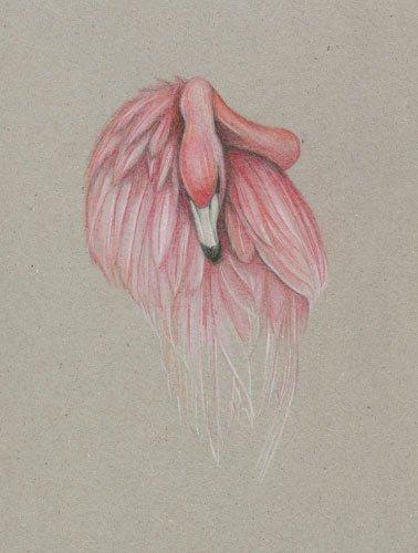 Artwork_Flamingo_Hayley-McMurray