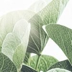 Green-Goodness canvas print